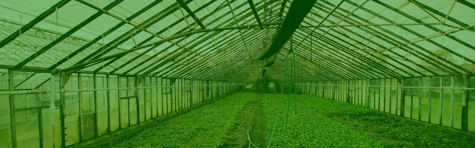The-Benefits-of-a-Greenhouse