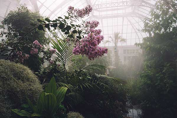 Adding to your homes aesthetic beauty - The Benefits of a Greenhouse