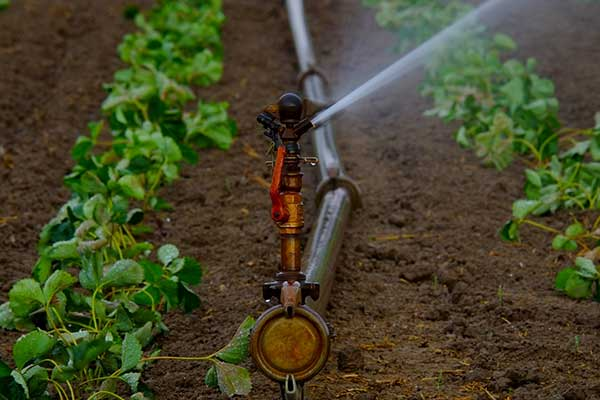 Check-your-irrigation-system