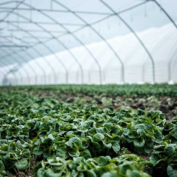 Protection - The Benefits of a Greenhouse